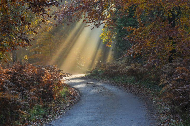 Esempio di fonti di luce in fotografia