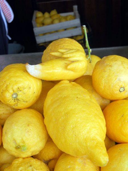 limoni giganti
