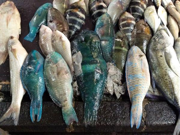 mercqato di port luis mauritius