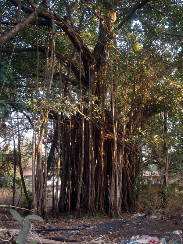 Goa diario di viaggio in India
