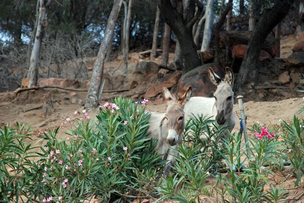 Arbatax Parco Naturalistico