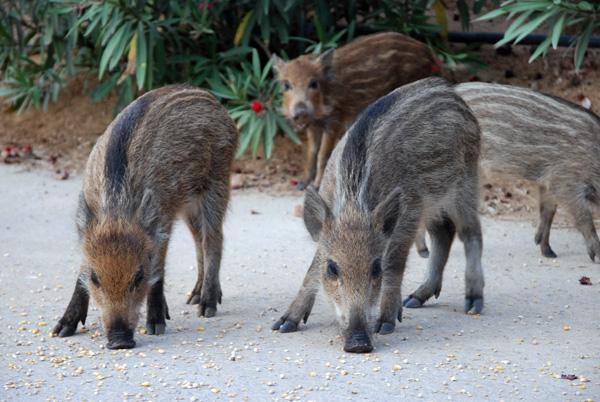 Arbatax Parco Naturalistico Bellavista