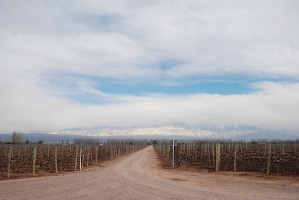 Cantine vinicole di Mendoza