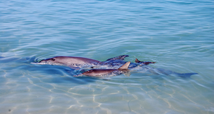 silvia-delfini