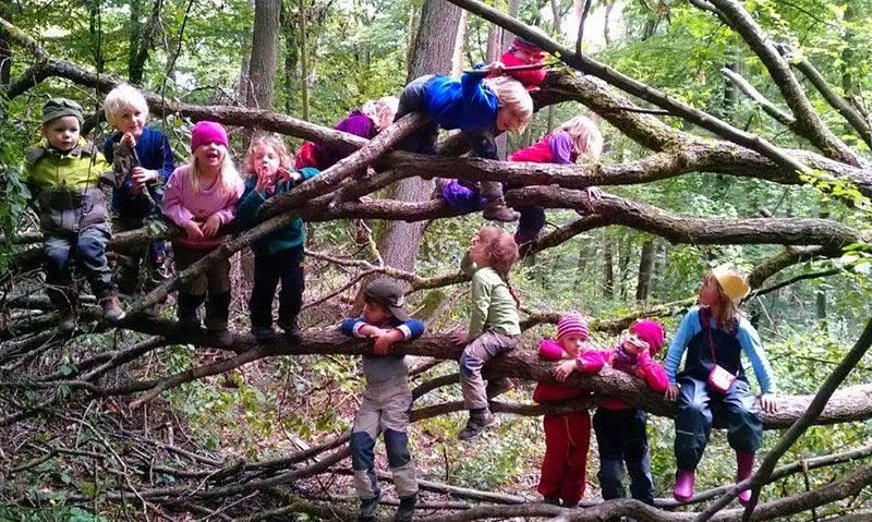 scuola bel bosco
