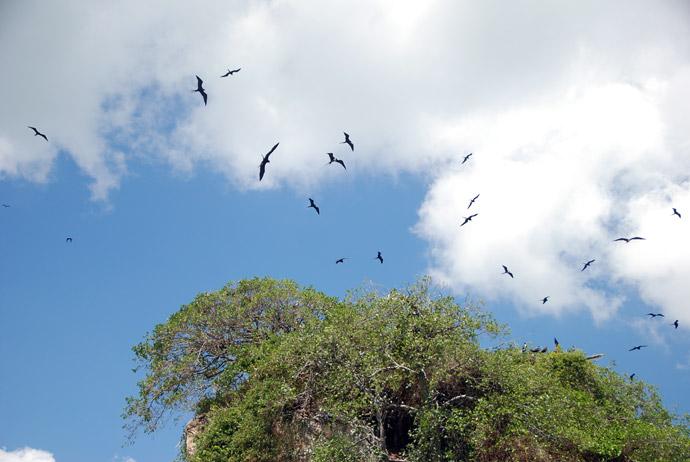 parque nacional de los haitises republica dominicana