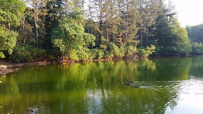 vacanza in Gargano nella Foresta Umbra