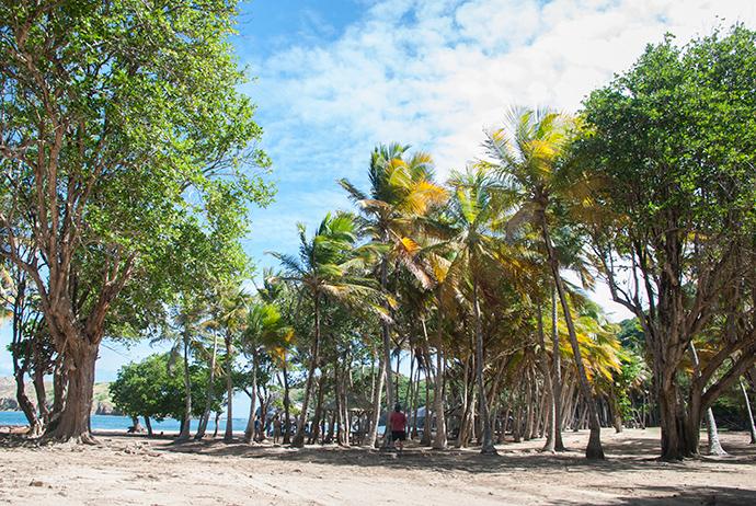 le spiagge di Guadalupa