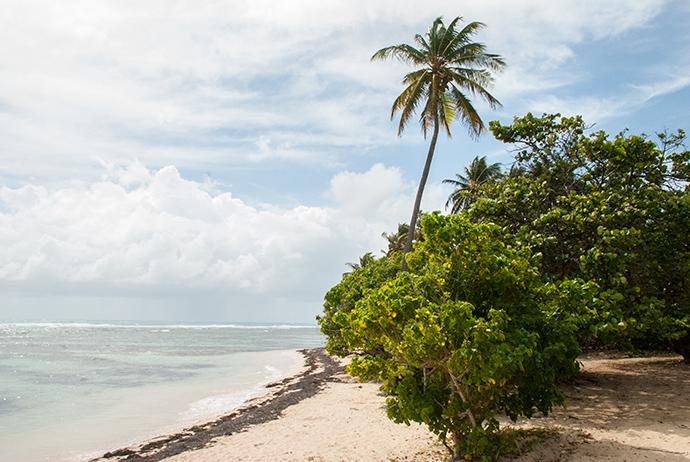 le spiagge di Gualupa