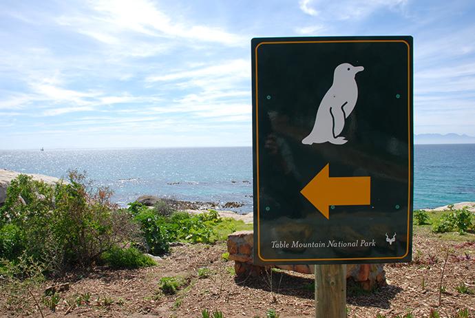 Viaggio in Africa: pinguini