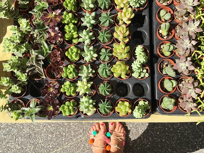 piante e animali perduti Guastalla