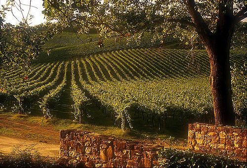 Chianti aziende vinicole