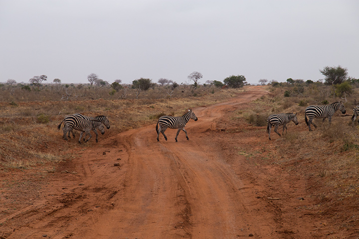 safari in Kenya