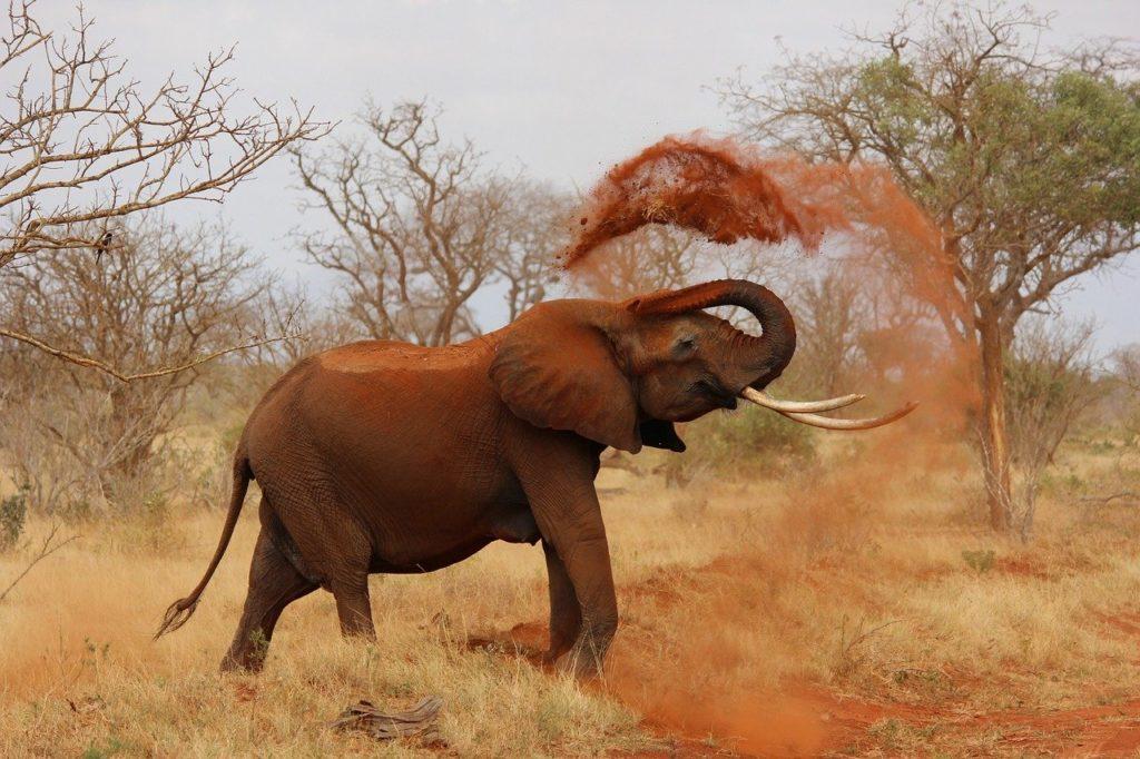 fauna del Kenya