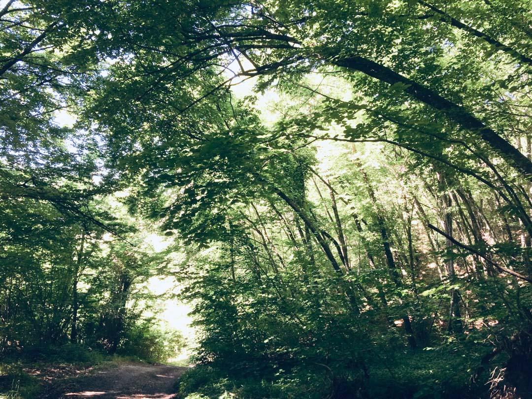 bosco appennino parmense