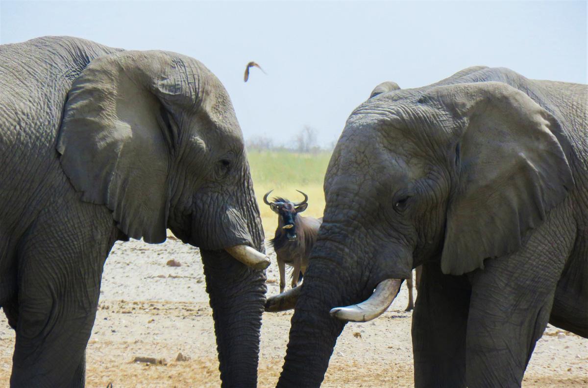 viaggio in Namibia Elefanti