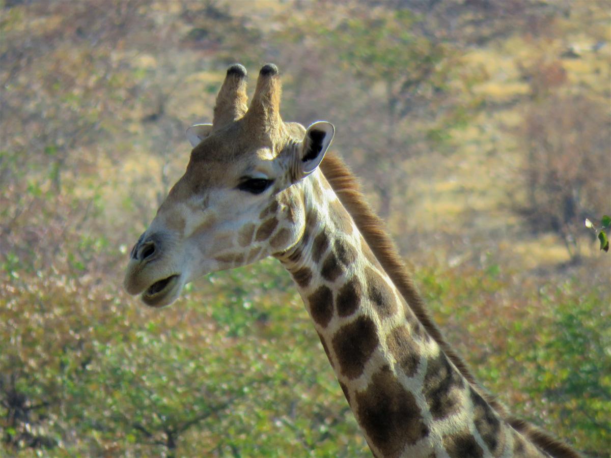Viaggio in Namibia Giraffa