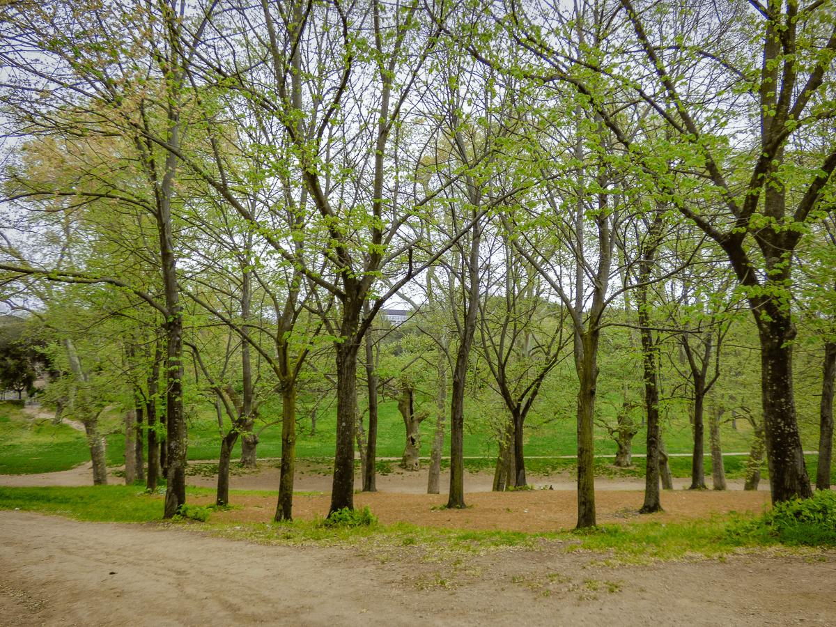 Parco dei Daini